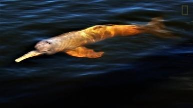 亞馬遜地區每兩天就會發現一個新的物種