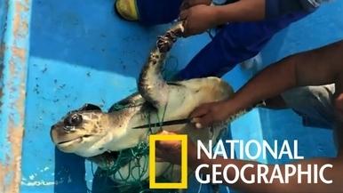 海龜受困幽靈漁網,幸運獲救!