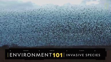 101環境教室:入侵種