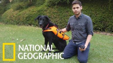 研究人員為什麼要給狗狗穿上「振動背心」呢?