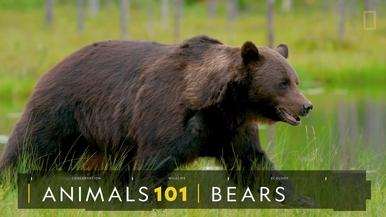 101動物教室:熊