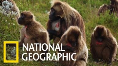 為什麼拍攝獅尾狒是個如此令人難忘的經驗?