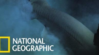 史上首次!研究人員用潛艇為深海「六鰓鯊」上定位標籤