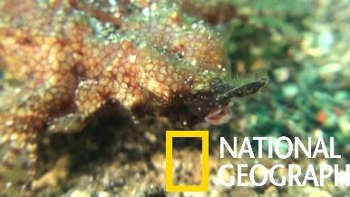 你有看過奇特的「海蛾魚」嗎?