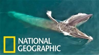 跟著優雅的「塞鯨」一起放鬆身心靈吧!