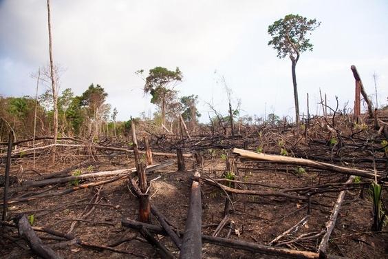 砍伐森林恐帶來更多會傳染給人類的疾病