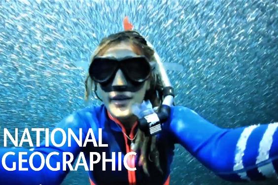 在澳洲外海與壯觀的「餌球」共泳