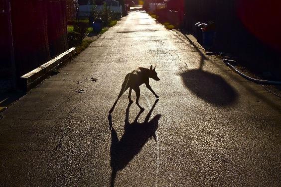 充滿威脅的獵犬