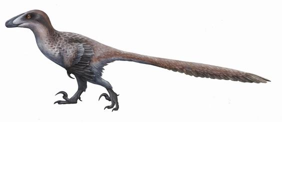 看過《侏羅紀公園》的伶盜龍嗎?伊朗發現了兩趾恐龍足跡