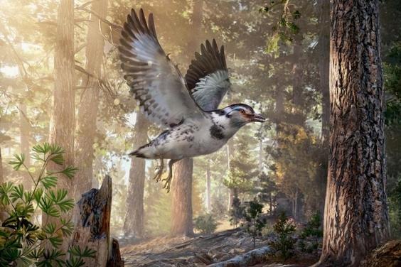 發現恐龍時代的「混亂」新種鳥類