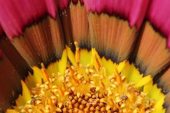 黃金粉塵:花朵特寫