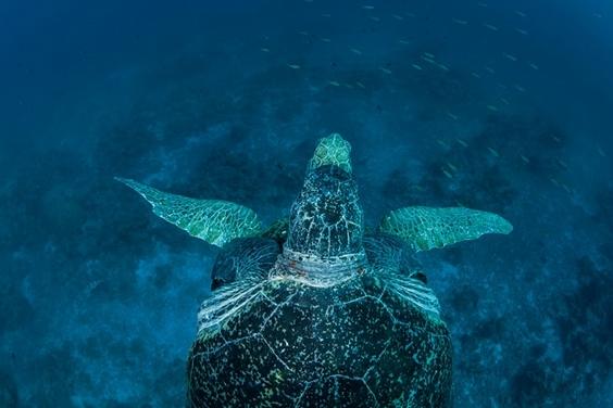 莫三比克絕代雙礁