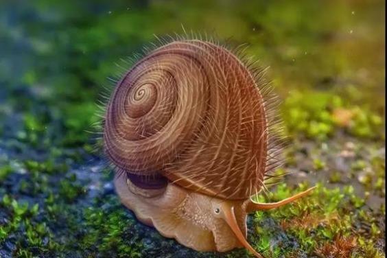 穿越時空的「毛茸茸」蝸牛