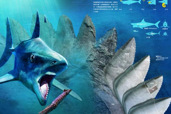 鯊魚的鋸齒之謎