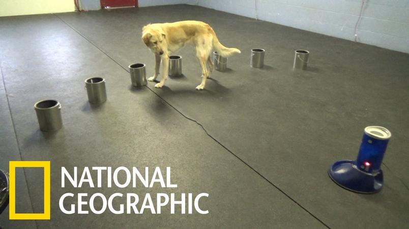 人類癲癇發作時的特殊氣味,狗能聞出來