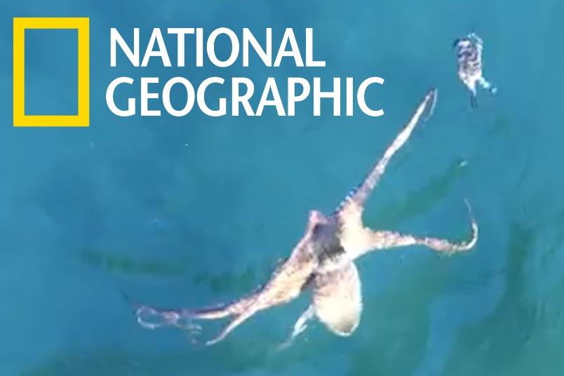 螃蟹跟章魚說 「來追我呀!」然後牠就死掉了