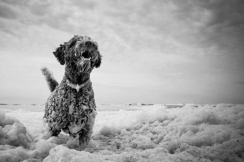 想玩水的狗