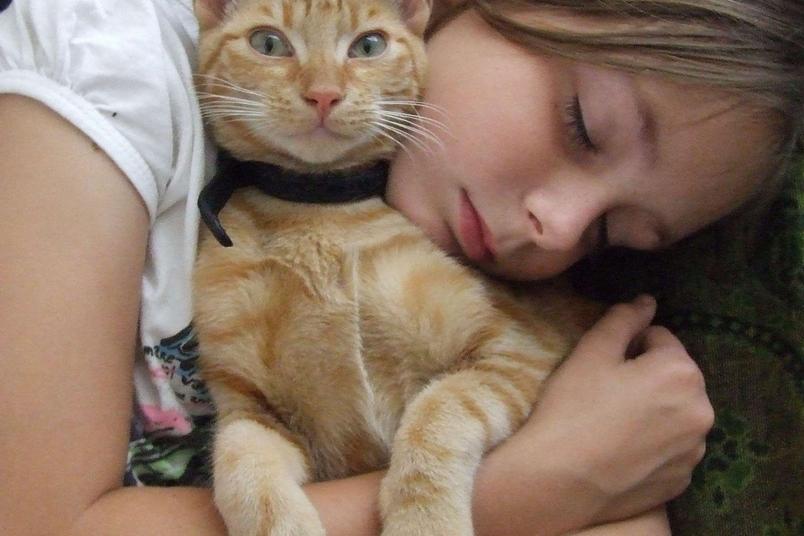 我的守護者:貓咪