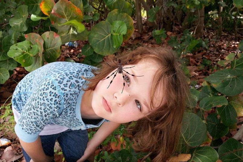 女兒與蜘蛛