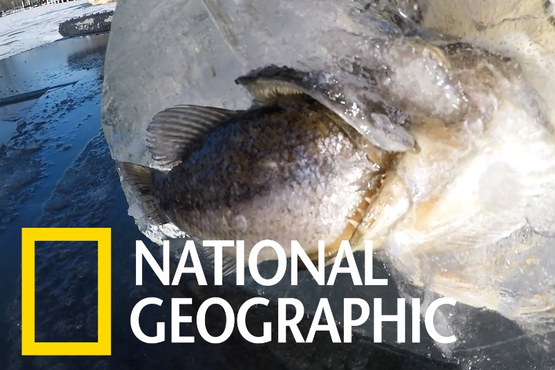 釣客在冰塊中發現半截魚,卻沒料到下方的「驚喜」