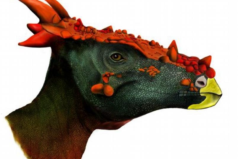 跌破專家眼鏡的頭骨:溫和的素食恐龍可能也會吃葷?