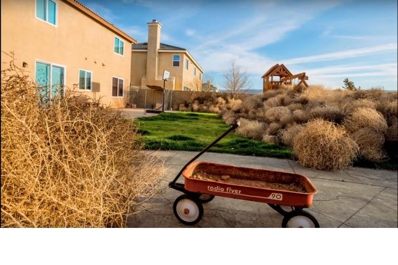 觀看一場風滾草之災吹遍美國西部