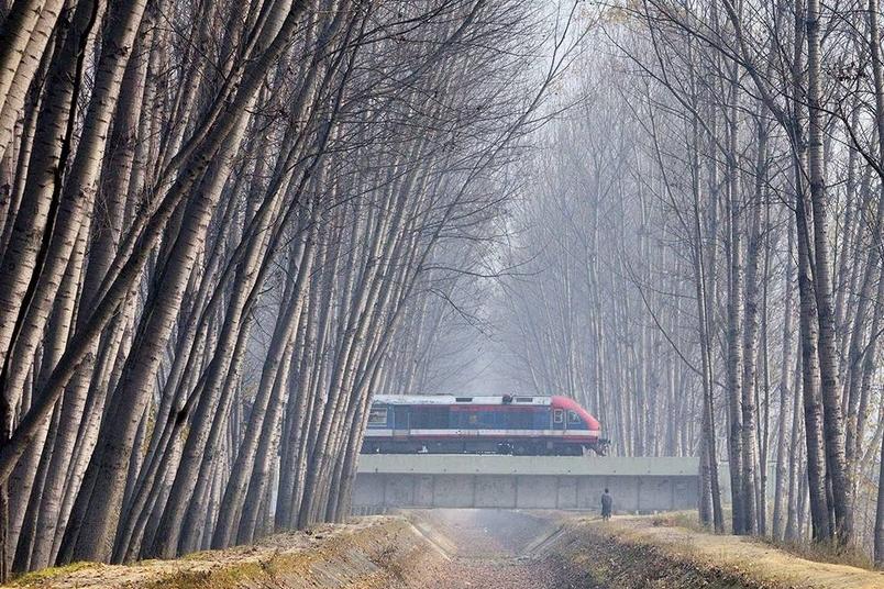 冬日色彩:白楊與鐵道
