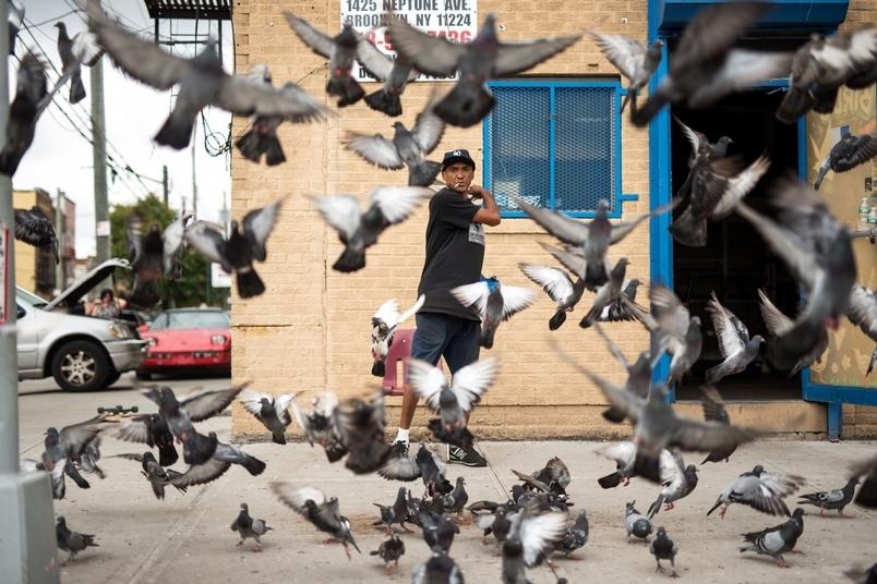鴿子的守護者