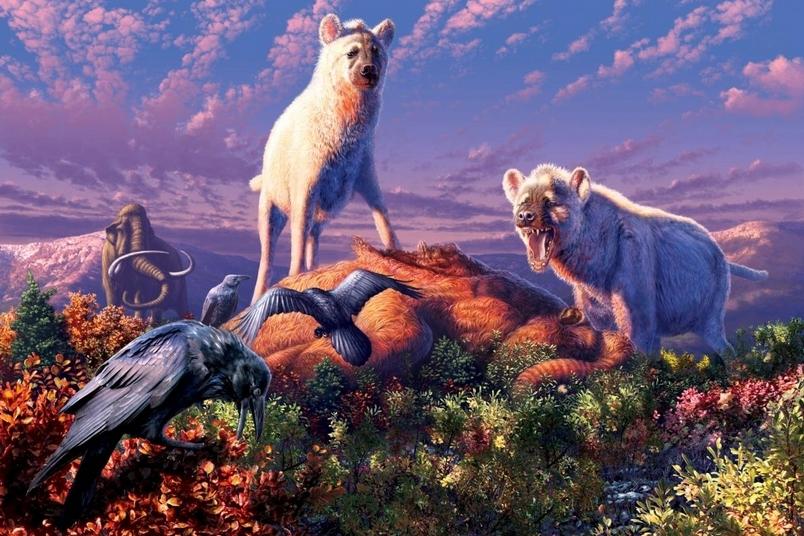 牙齒化石揭露:遠古曾有鬣狗生活在北極