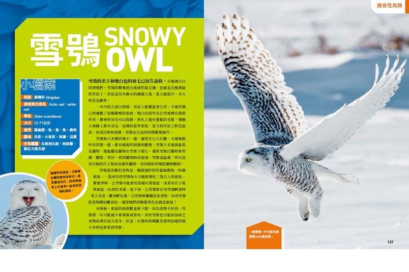 《國家地理終極捕食動物百科》雪鴞