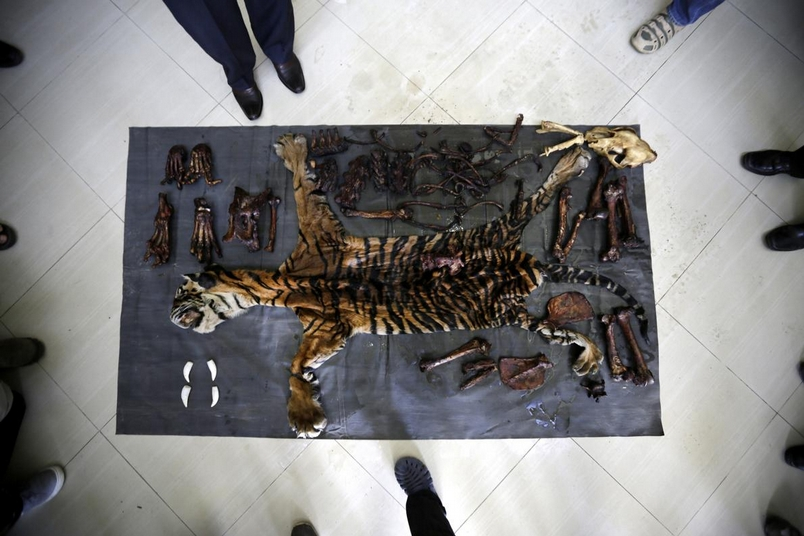犯罪記錄簿:虎牙、雪豹與金鵰