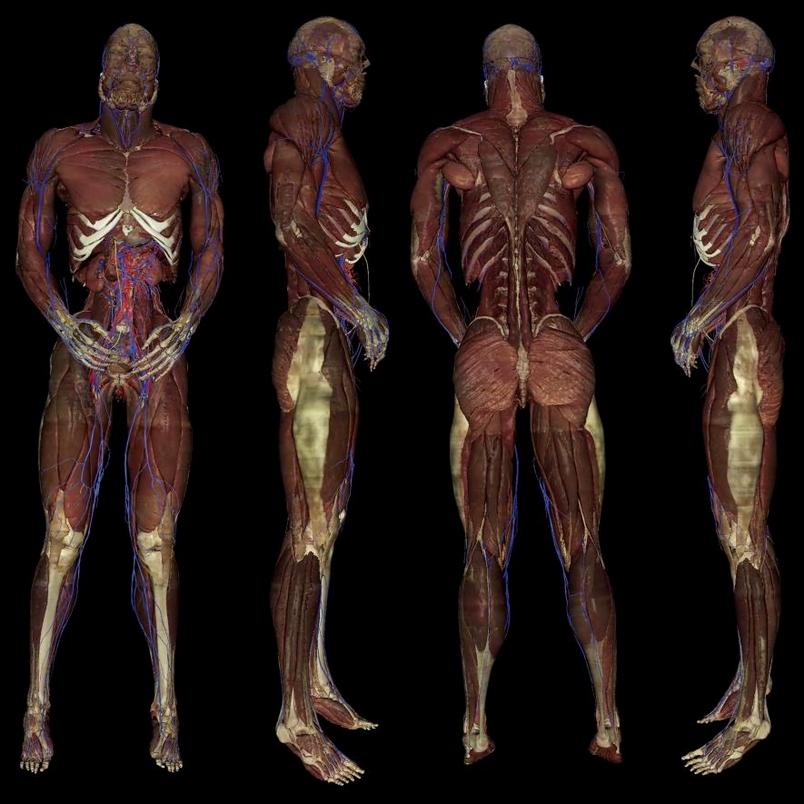 數位遺體能夠取代真正的人類遺體嗎?
