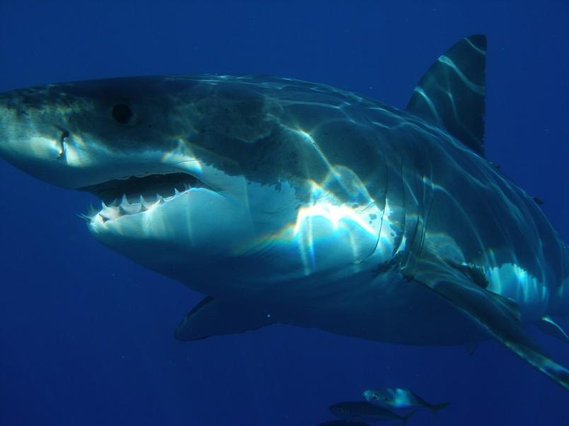 酷知識測驗:「鯊很大」的鯊魚是非題