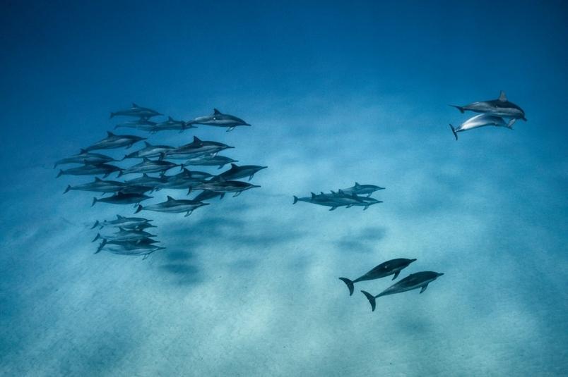 與海豚對話