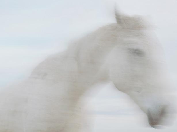 馬背上的民族