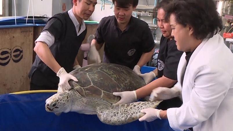 許願池綠蠵龜吞5公斤重錢幣 不幸死亡