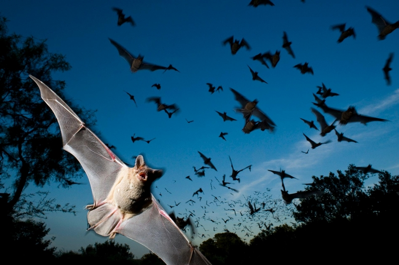 惡名昭彰的蝙蝠殺手有個弱點