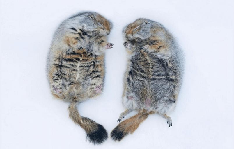 15種可愛動物玩雪,哪些讓你想抱緊處理?