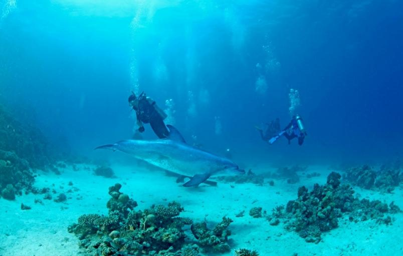 【華人探險家專欄 ─ 鄭明修】世界著名潛水勝地的海洋生態保育策略