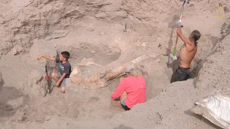 男孩跌個跤,發現百萬年前的化石
