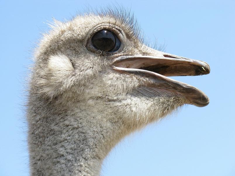 酷知識測驗:鳥類祕密大公開