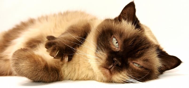 貓咪不是藥