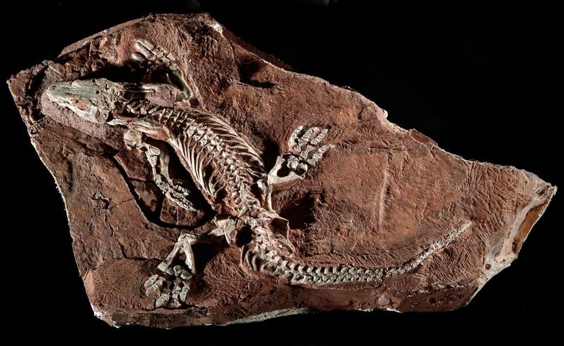 史前動物怎麼走有學問!來看科學家如何破解
