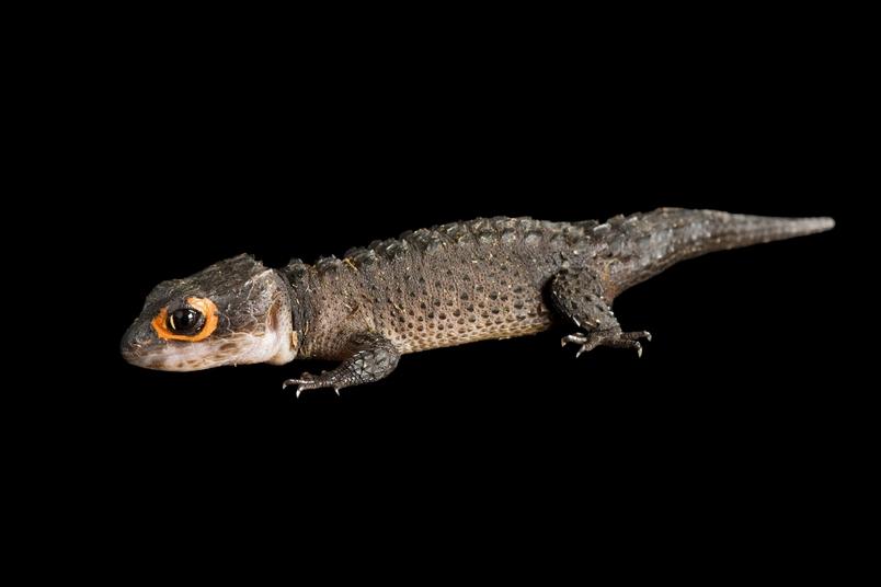 野生生物國際貿易的漏洞──交易的大多數動物未受保護