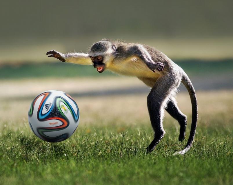 衝阿!巴西榮耀!