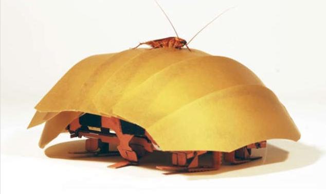 救援機器人:跟著蟑螂學鑽縫