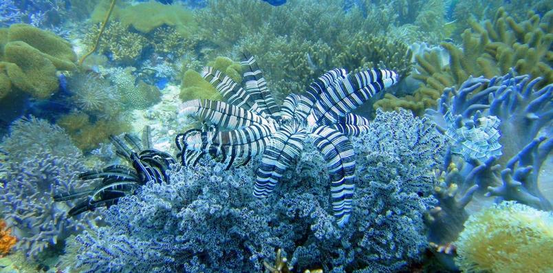 革新海洋生態學的eDNA技術,究竟有何神奇之處
