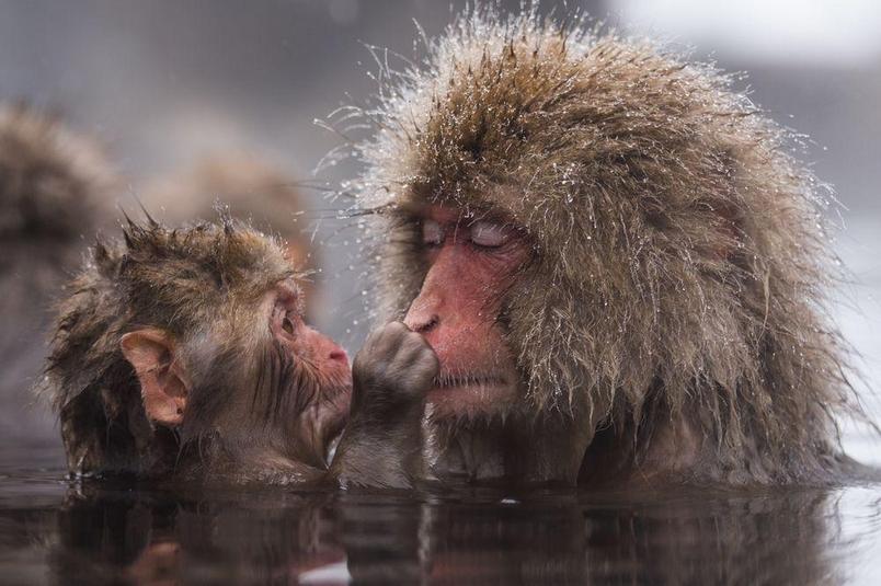 新春賞猴好采頭:猴年圖集