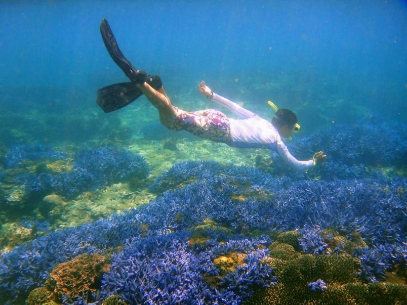 台灣是海洋生物多樣性之島