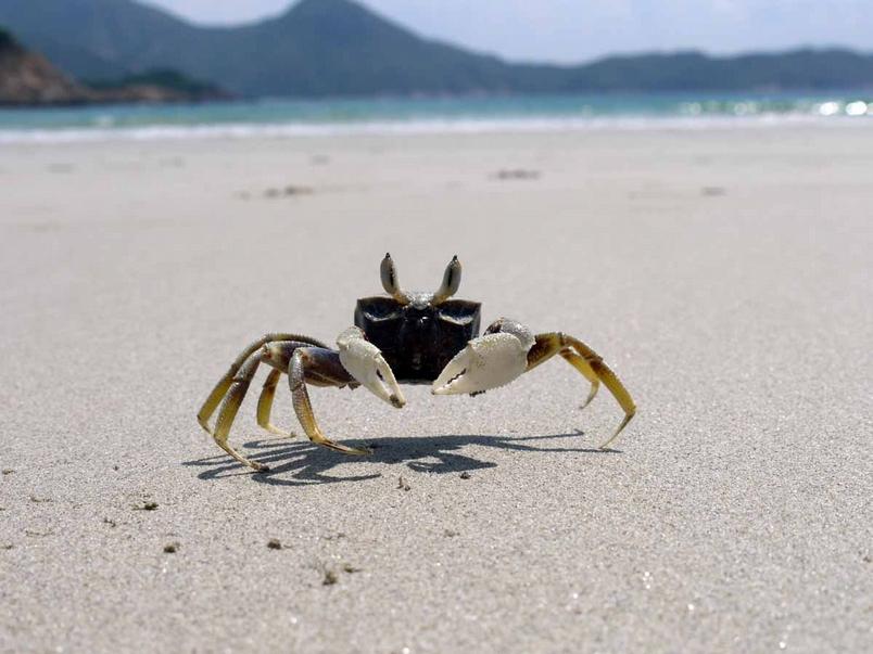 活在潮汐間:台灣潮間帶生物多樣性